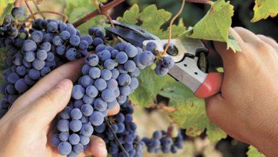 Photo of La CAME asegura que la vitivinicultura pasa por una situación de quebranto