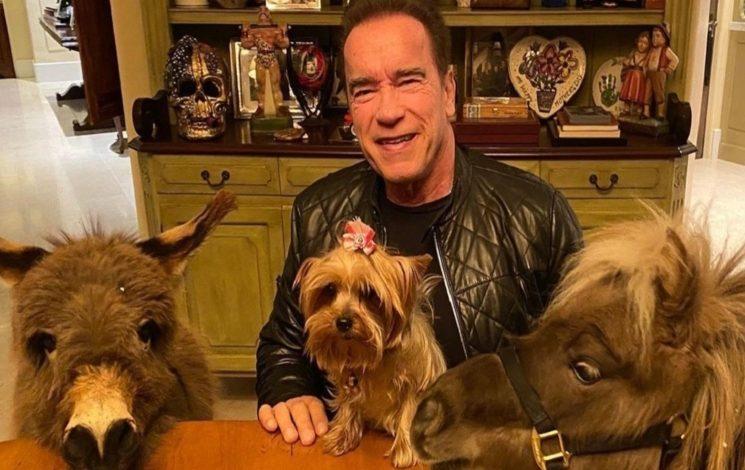 Photo of El mini burro que tiene como mascota Arnold Schwarzenegger es furor en las redes