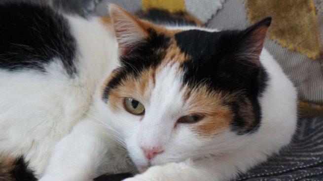 Photo of Día Internacional del Gato: curiosidades sobre este felino