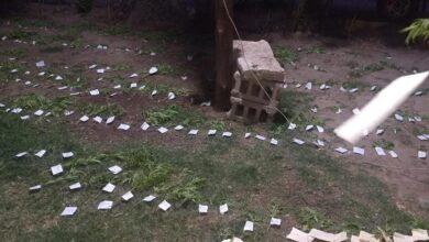 Photo of Chimbas: policías perseguían a delincuentes y en el camino se encontraron con una finca plagada de plantines de marihuana
