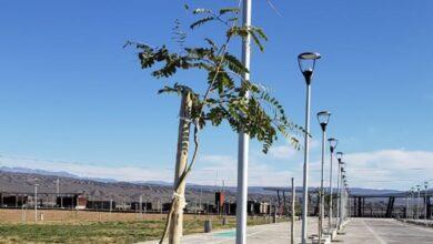 Photo of Forestaron el Costanera Complejo Ferial