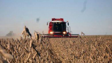 Photo of El precio de la soja creció un 90% en el último año y los analistas ven factores climáticos y financieros para que siga subiendo